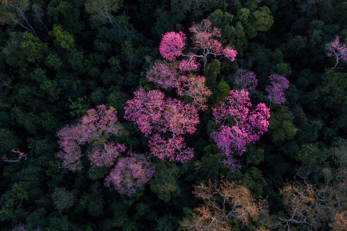 Reserva Natural Morombí