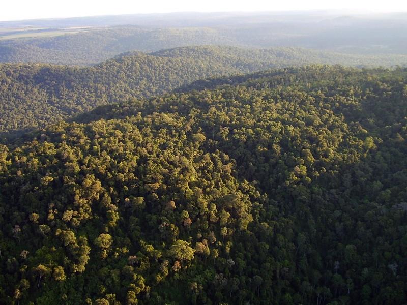 WWF-PARAGUAY EN RELACIÓN A LA LEY DE DEFORESTACIÓN CERO